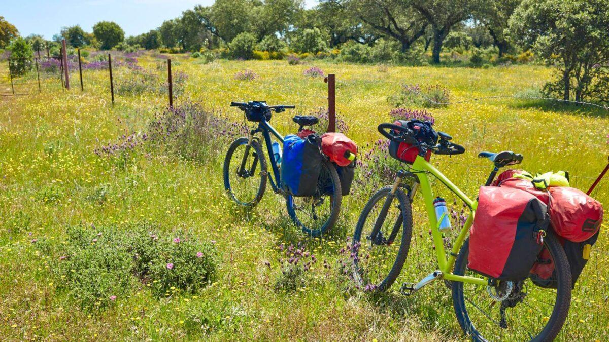 Rower trekkingowy – jaki kupić i gdzie sprawdzi się ten model?